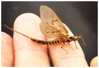 Inventering av insekter